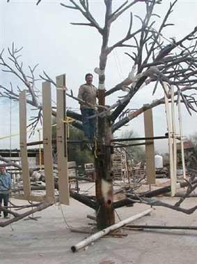 Fabrican en Hermosillo árbol para Disney World